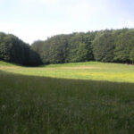 """Sosteniamo il sito naturale """"Piano della Nevena"""" nell'ambito del FAI"""